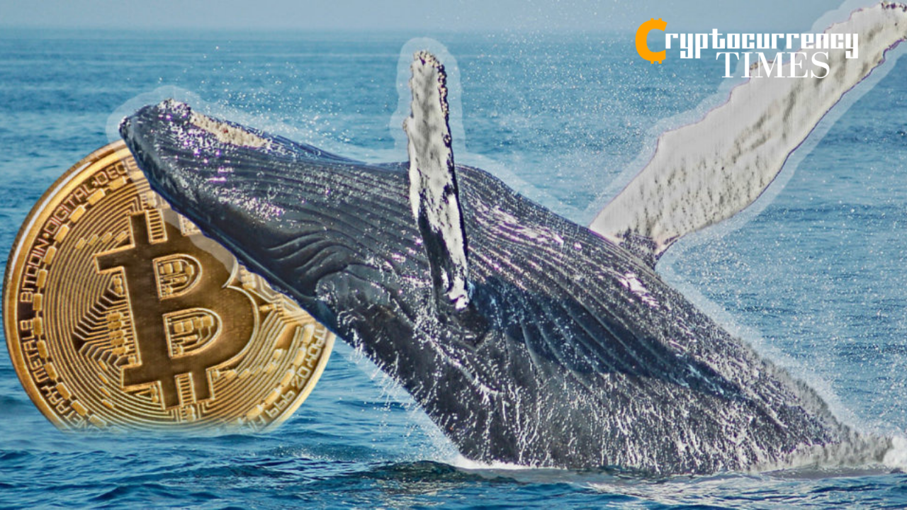 Whales take heavy profits in February, offload 140k Bitcoin
